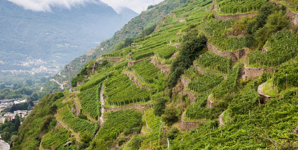 VALTELLINA, il vino in…..terrazzo