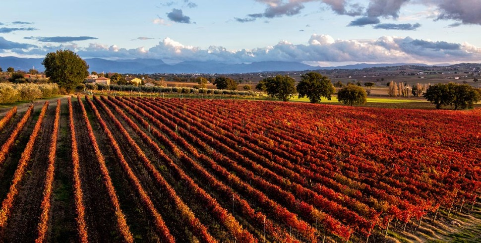 Sagrantino,  il vino dei miracoli