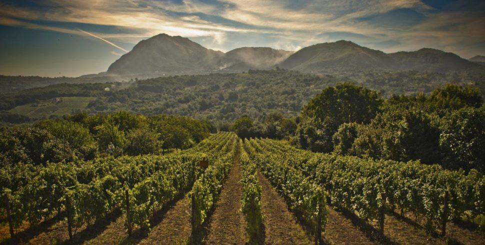 Fiano di Avellino,  grande vino del Sud